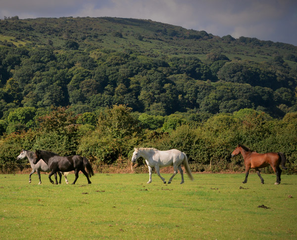 Eastlake Farm - Horse retirement farm on dartmoor